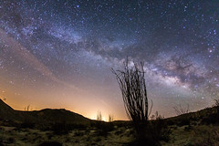 Milky Way and an ocotillo at Canyon Sin Nombre (slworking2) Tags: california unitedstates anzaborrego ocotillo milkyway anzaborregodesertstatepark