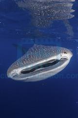2013 12 VOISIN MALDIVES-3592