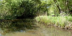 The river Yar at Afton Marshes Freshwater (BOB@ wootton) Tags: river isleofwight isle afton wight freshwater yar iow marshes
