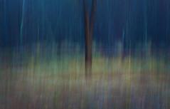 edwinloyolaNewYorkPortfolioReviewFall05 (Edwin Loyola) Tags: autumn winter summer abstract fall nature seasons fineart fourseasons icm esl intentionalcameramovement edwinsloyola edwinloyola edwinloyolaphotography eslphotography
