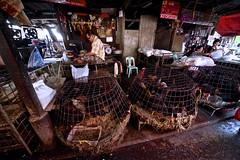 Flickr_Bangkok_Klong Toey Market-06-02-2015_IMG_5174 (Roberto Bombardieri) Tags: food asia bangkok tailandia mercato klong toey markey thail