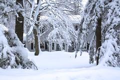 House in Snow (Read2me) Tags: winter snow white tree cye house pregamesweepwinner thechallengefactory gamewinner friendlychallenge challengeclubwinner yourock2nd storybookotr pregameduelwinner bigmomma agcg superherowinner gamex2sweepwinner 15challengeswinner
