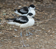 Cotswold Wildlife Park Jan 2015 (17 of 117) (michael.vaughan1860) Tags: park europe wildlife location cotswold cotswoldwildlifepark greatbritian