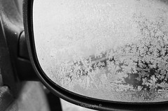 DSC_9709 (timmie_winch) Tags: blackandwhite white black cold fern macro ice photography blackwhite tim nikon frost january frosty 1855mm icy winch frostymorning 2015 fernfrost 1855mmnikonkitlens d7000 nikond7000 january2015 timwinchphotography timwinch