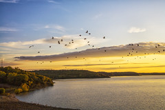 Birds on the wing (Kansas Poetry (Patrick)) Tags: sky birds kansas lawrencekansas clintonlake patrickemerson patricklovesnancy