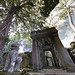 KD's World Tour: The Walking Tree at Ta Prohm!