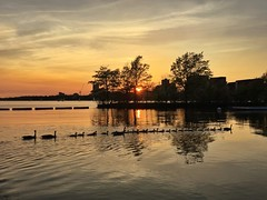 Large goose family ((Jessica)) Tags: family sunset water boston geese wildlife massachusetts newengland goose line goslings esplanade pw