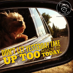 Forget the rear-view, live for the present. (itsayorkielife) Tags: yorkiememe yorkie yorkshireterrier quote