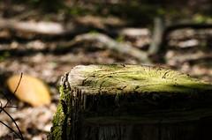 Waldimpression aus der Pfalz (-BigM-) Tags: wood tree forest germany deutschland holz wald baum rinde pfalz deutsche weinstrasse