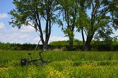 Sunagawa-Fukagawa Cycling Road (T&W.Eager) Tags: hokkaido sigma cycle  foldingbike merrill foveon takikawa dp2 dp2m dp2merrill ternverge ternbicycle