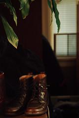 for walking (chickentender (Eyewanders Foto)) Tags: windows home leaves walking afternoon shadows dof boots cedar laced sidelight milesandmiles vivitarseries170210mm35 pentaxk3 eyewandersfoto