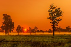 Here Comes The Sun (Thaiexpat) Tags: trees colors field sunrise landscape thailand outdoor scenic serene rancher 2016 ubonratchathani a7rii
