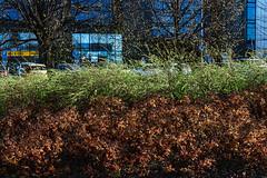 Image 1458 (Narkissos.) Tags: colour digital canon 50mm spring tallinn estonia ii f18 1ds markii 2016 canoneos1dsmarkii canonef50mmf18ii