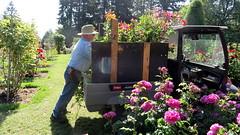 Long Time Gardener (Andrew's camera works) Tags: portland pdx rosegarden washingtonpark