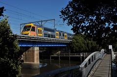 A Waratah among the mangroves (highplains68) Tags: railroad train rail railway australia nsw newsouthwales waratah aus riverwood aset sydneytrains easthillsline