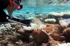 Amy moving in with the GoPro (dfinney23) Tags: dfinney23 2016 maldives snorkeling underwater coral anemone fish sea