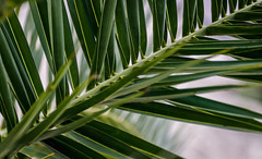 (ericbeaume) Tags: tree green leaves nikon bokeh sigma palm 18300mm d5100 ericbeaume