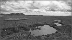 Norderney; Nature Reserve, Salt-/ Wet- Grassland (Wayne Interessiert's) Tags: sky bw white black monochrome clouds landscape weide himmel wolken ile norderney insel ciel prairie nuages paysage landschaft isle parkland saule naturreservat naturreserve saltwetgrassland