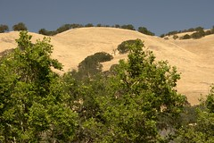 Hills Surrounding Lake Del Valle (jeffmgrandy) Tags: summer picnic livermore delvalle d7200