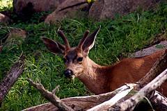 116-point lobos- (danvartanian) Tags: nature landscapes pointlobos