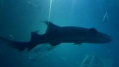Plymouth Aquarium - Predators Tank 2 (jack_lanc) Tags: plymouth acquarium wildlife fish sharks conservation marine biology devon predator predators