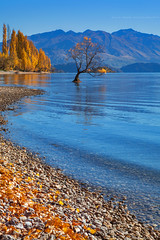 Wanaka Tree Autumn || LAKE WANAKA || NZ (rhyspope) Tags: new blue autumn lake pope color colour tree fall nature water yellow canon poplar zealand nz 5d wanaka rhys mkii rhyspope
