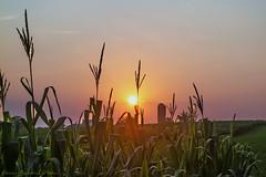 Amish Sunrise_3146 (smack53) Tags: sunset summer sunrise canon pennsylvania powershot summertime lancastercounty paintedsky g12 amishcountry canonpowershotg12 smack53 amishvacationjuly2012