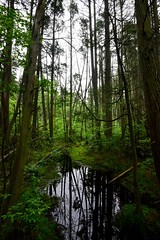 wells mills cedars (primemundo) Tags: nj cedar cedars waretown wellsmillspark