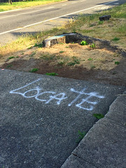 Locate (Dill Pixels (THE ORIGINAL)) Tags: street tree grass word dead paint suburban random empty driveway stump