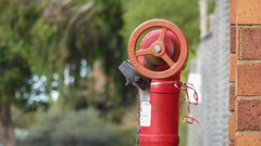 Beribboned Hydrant (Theen ...) Tags: adelaide bokeh brick chainlink cyclone doubleheaded fence fire hydrant lumix oval pink red ribbon silver sports stadium thebarton theen trees wall
