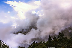 Clouds in Mt. Tao, Taiwan. (Evo-PlayLoud) Tags: blue trees sky cloud mountain mountains tree clouds canon landscape taiwan bluesky tokina    seaofclouds     550d t116   1116mm mttao tokina1116mmf28 canon550d canoneos550d cloudsstormssunsetssunrises