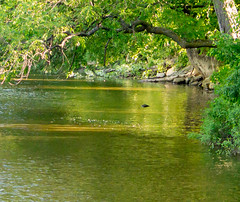 The River (Pauline Brock) Tags: reflection green landscape waterfront riverside peaceful serene riverscene