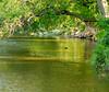 The River (Pauline Brock) Tags: reflection green landscape waterfront riverside peaceful serene riverscene