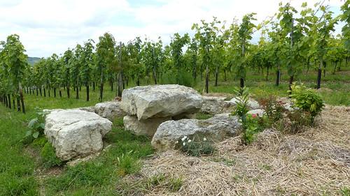 Pilgerweinberg - Weingarten