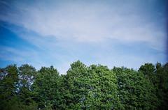 sky-high (itawtitaw) Tags: above sky cloud sun white color tree green film nature contrast analog landscape outside diy lomo lca fuji bright bluesky scan line epson 28 135 vignette divided fujisuperia200 32mm c41 v700 tetenal colortec lomokompaktautomat
