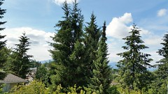 First full day of summer (D70) Tags: summer canada mountains coast day bc first full burnaby hemlock 172366