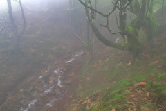 Parque natural de #Gorbeia #Orozko #DePaseoConLarri #Flickr -088 (Jose Asensio Larrinaga (Larri) Larri1276) Tags: 2016 parquenatural gorbeia naturaleza bizkaia orozko euskalherria basquecountry