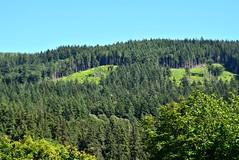 (careth@2012) Tags: trees forest woodland landscape nikon scenery view hill scenic scene hillside 55300mm nikond3300 d3300