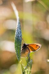 Rveil lumineux (bga92) Tags: lumire papillon rose