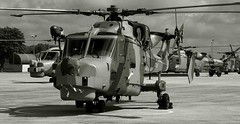 Wild about the cat (crusader752) Tags: bw monochrome mono blackwhite helicopter helicopters wildcat westland lynx rn royalnavy 2015 airday agustawestland hma8 rnasyeovilton hma2 zz396 zz380