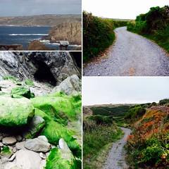 Cornwall Landscapes (JordanHenstock) Tags: flowers sea photography moss cornwall trails landsend