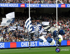 "Geelong Football Club Photos 2016 (JamesDPhotography) Tags: cats football powershot cheer ""canon ""cameron photography"" ""patrick ""tom ""jimmy stanley"" ""shane club"" squad"" cats"" hawkins"" ""geelong dangerfield"" guthrie"" ""rhys bartel"" kersten"" ""jamesd sx710"""