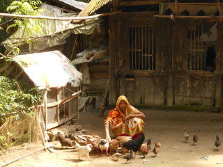 Rehena Begum feeding her chickens. Photo by Md. Zamal Uddin, 2012.