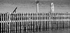 Rep, Tr  Vann (brandsvig) Tags: wood summer bw june skne sweden harbour sverige ef sommar resund hamn tr canon500d 18135 2013 vikhg