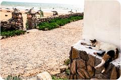 Meowrocco (holly lanasolyluna) Tags: street cats cute animal garden photo foto market morocco gato kawaii meow marrakesh ramadan marruecos array fotografa fotoperiodismo lanasolyluna
