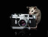 Opossum Photographer (Guillaume Dutilh) Tags: camera leica possum baby film opossum photographer leicam3