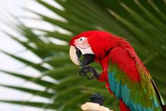 IMG_0206 (Ploigos) Tags: bird parrot greece ioniansea syvota