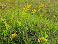 Parco nazionale della Majella  2 (Aldo433) Tags: flowers italy mountain italia florida natura fiori montagna abruzzo appennino ortona parconazionaledellamajella