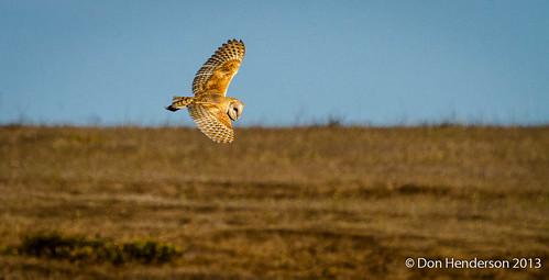 Barn Owl Flight (2 of 2) by catchlightdon, on Flickr