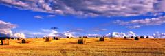 IMG_2493 (Gena Golovskoy) Tags: summer clouds landscape russia land belgorod nikolskoe